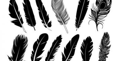 feather vector free