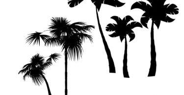 free vector palm tree